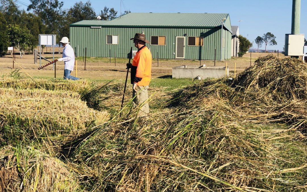 Vetiver Grass Cut & Remove